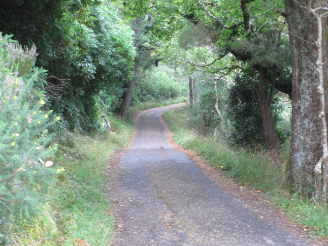 Bike trail around Muckross Lake