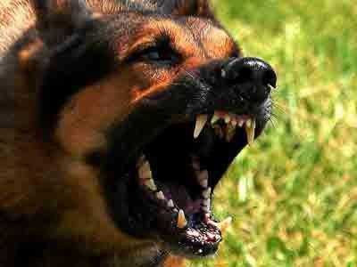 wpid-angry-dog.jpg